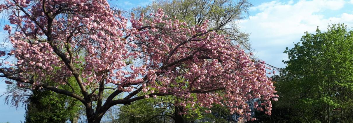 Gefahrenquelle Baum